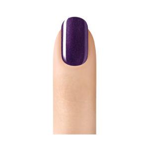 purple-orchid-2